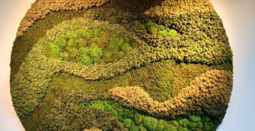 Moscirkel moswand organisch