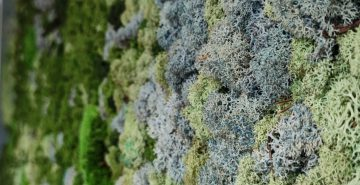 Mossenmix blauw mos glaciem kleur mosschilderij