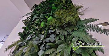 Junglewand met lijst plantenwand