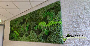 mosschilderij mossenmix Moswens
