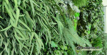 Junglewand Moswens