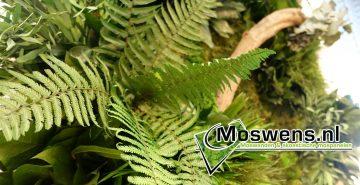 Moswens Jungleschilderij Plantenwand Buro3 02