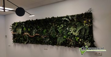 Junglewand jungleschilderij moswand moswens 2