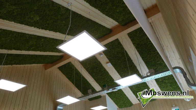 Plafond Moswand Mosstroken moswens.nl (1)